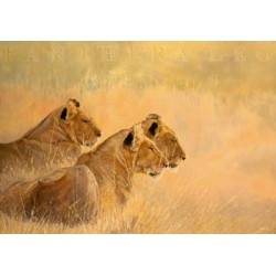 Beck: Panthera leo